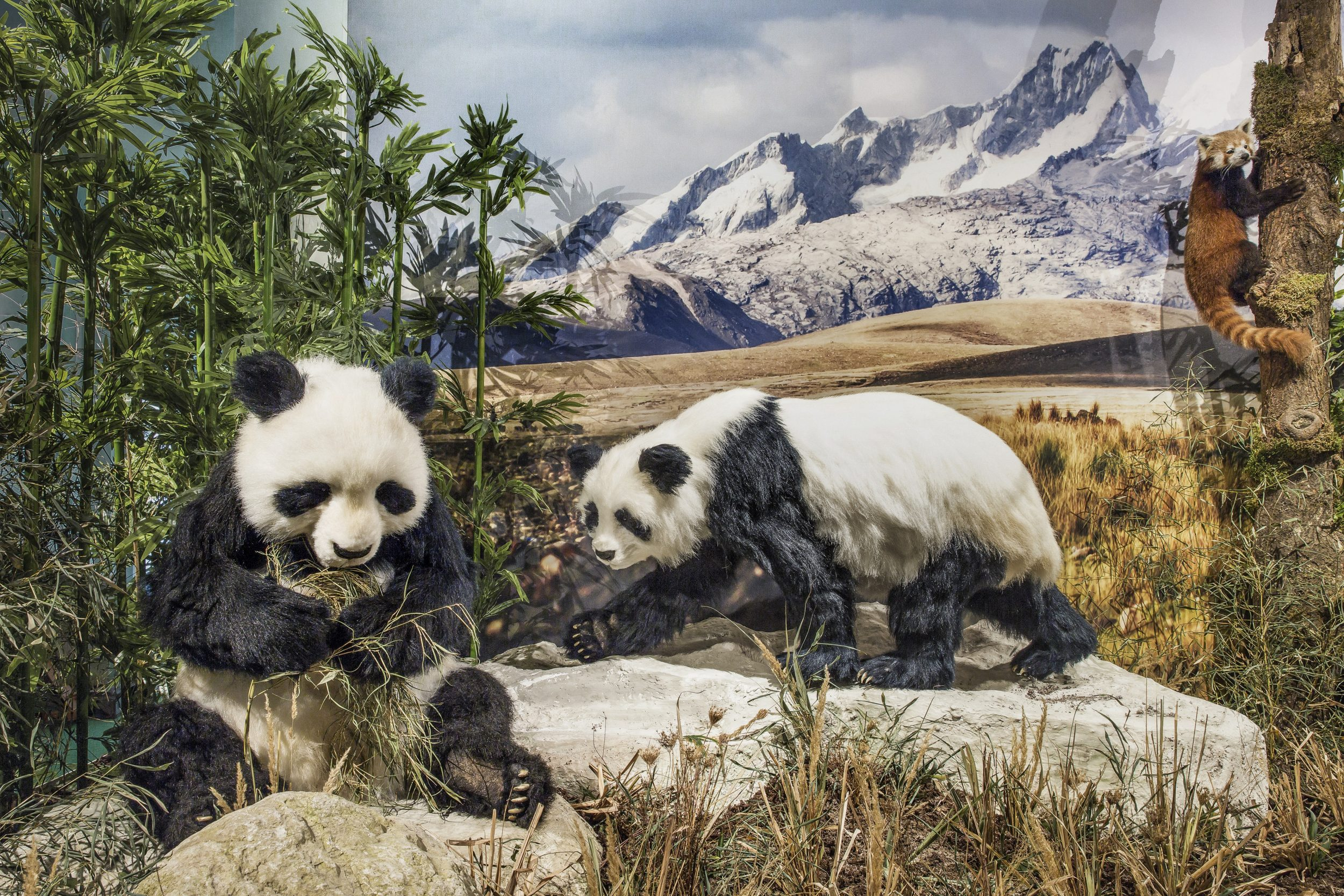 Klimascheide Himalaja Pandas
