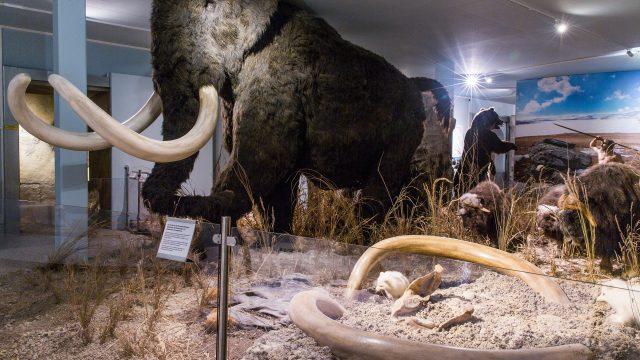 Mammut in der Steppe