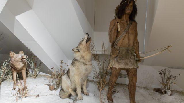 Mensch und Wolf